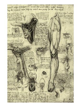 Human Anatomy Giclee Print by  Leonardo da Vinci