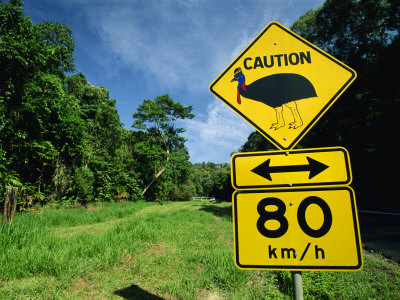 Warning Road Sign for Cassowaries Near Mission Beach, Northeast Coast of Queensland, Australia Photographic Print by Robert Francis
