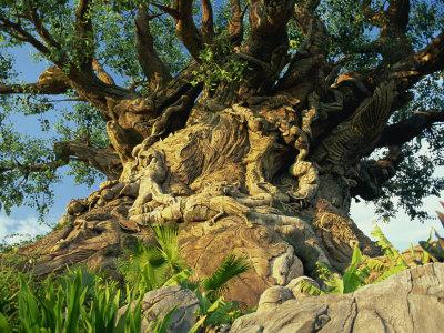 Tree of Life, Animal Kingdom, Disneyworld, Orlando, Florida, USA Photographic Print by Tomlinson Ruth
