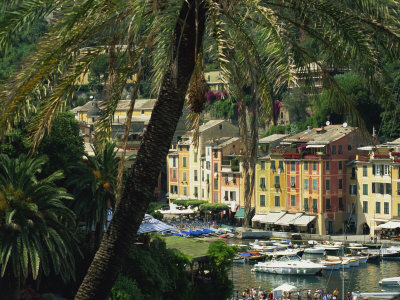 Harbour from Hillside, Palm-Tree in Foreground, Portofino, Portofino Peninsula, Liguria, Italy Photographic Print by Tomlinson Ruth