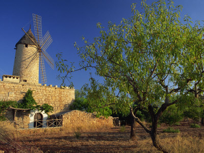 Typical Agricultural Windmill, Mallorca, Balearic Islands, Spain, Europe Photographic Print by Tomlinson Ruth