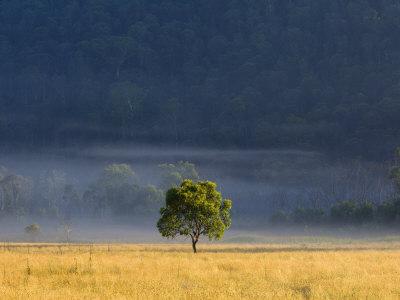 Gum Tree, Kosciuszko National Park, New South Wales, Australia, Pacific Photographic Print by Schlenker Jochen