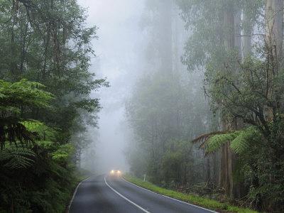 Road and Fog, Dandenong Ranges, Victoria, Australia, Pacific Photographic Print by Schlenker Jochen
