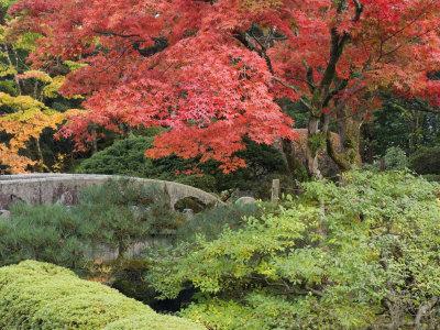 Shojo-En Zen Garden, Nikko, Central Honshu, Japan Photographic Print by Schlenker Jochen