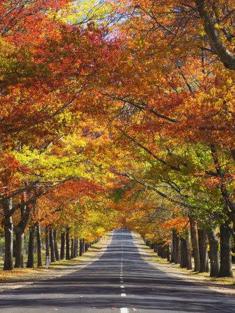 Memorial Avenue in Autumn, Mount Macedon, Victoria, Australia, Pacific Photographic Print by Schlenker Jochen