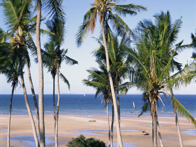 Palm Tree and Tropical Beach on the Coast of Mozambique, Africa Photographic Print by Groenendijk Peter