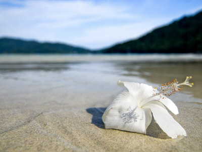 Hibiscus Flower on Beach, Perhentian Islands, Malaysia, Southeast Asia Photographic Print by Porteous Rod