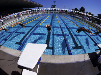 Women Diving into the Pool to Start a Swimming Race Photographic Print by Steven Sutton