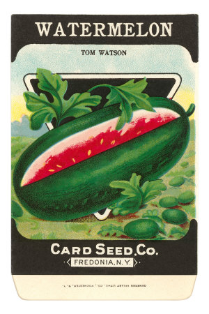 Watermelon Seed Packet Premium Poster