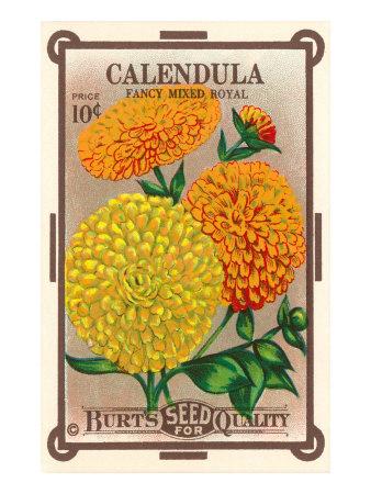 Calendula Seed Packet Giclee Print