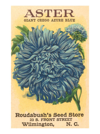 Aster Seed Packet Prints