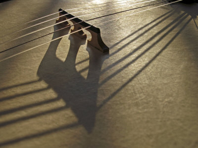 Bridge and Strings Cast Shadows across the Head of a Banjo Photographic Print by  White & Petteway