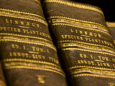 Books in the Library of Carl Linnaeus Photographic Print by Mattias Klum