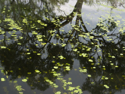 Leaves Floating on Water Photographic Print by Randy Olson