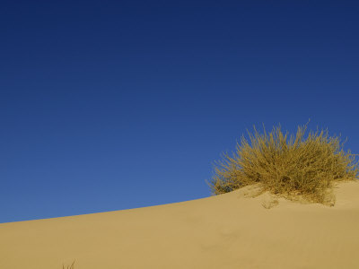 Sand and Sky and Shrubs at White Sands National Monument Fotografiskt tryck