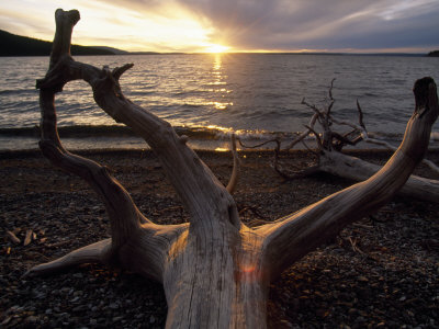 Driftwood Along the Shoreline of Yellowstone Lake Photographic Print by Annie Griffiths Belt