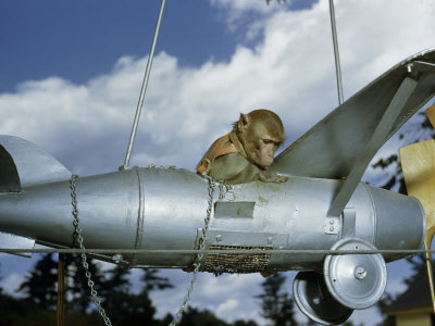 Monkey Rides in a Model Airplane Photographic Print