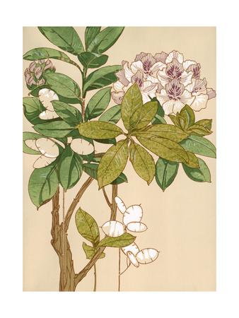 Magnolia Tree Flowers Poster