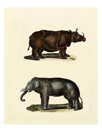 Animal Studies IV Plakater