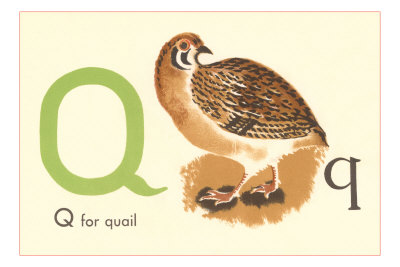 q is for quail  is for Quail Poster -