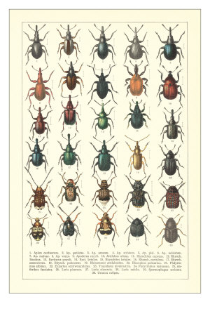 Lots of Beetles Premium Poster