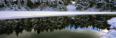 Reflection of Fir Trees in a Lake, French Riviera, Provence-Alpes-Cote D'Azur, France Photographic Print by  Panoramic Images