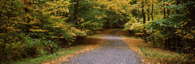 Road Passing Through Forest, Chestnut Ridge County Park, Orchard Park, Erie County, New York State Photographic Print by  Panoramic Images