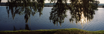 Reflection of Tree in a River, Middleton Place, Charleston, Charleston County, South Carolina, USA Photographic Print by  Panoramic Images