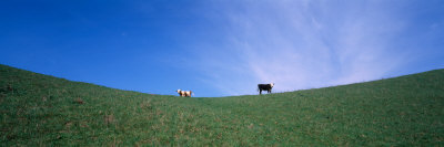 Two Cows in a Field, USA Photographic Print by  Panoramic Images
