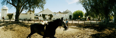 Horse Running in an Paddock, Gerena, Seville, Seville Province, Andalusia, Spain Photographic Print by  Panoramic Images