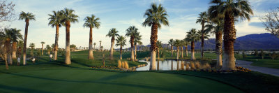 Palm Trees in Golf Course, Desert Springs Golf Course, Palm Springs, Riverside County, California Photographic Print by  Panoramic Images