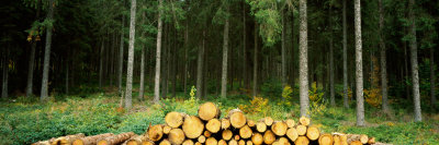 Stack of Firewood in a Forest, Northern Black Forest Region, Baden-Wurttemberg, Germany Photographic Print by  Panoramic Images
