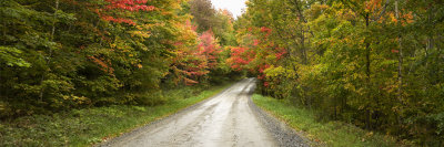 Dirt Road Passing Through a Forest, Stowe, Lamoille County, Vermont, USA Photographic Print by  Panoramic Images