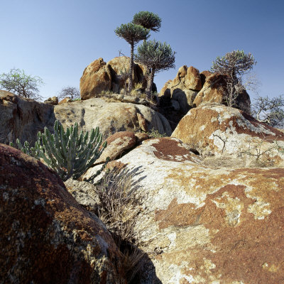 Lichen-Stained Boulders and Euphorbia Trees Add Form and Colour to Lake Eyasi's Impressive Western  Photographic Print by Nigel Pavitt