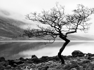 Solitary Tree on the Shore of Loch Etive, Highlands, Scotland, UK Fotografiskt tryck