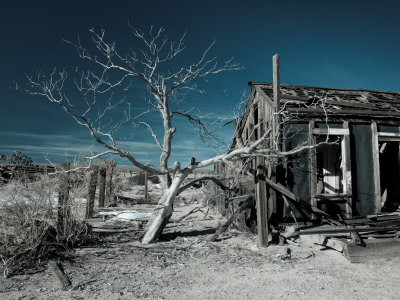 California, Cima, Mojave National Preserve, Abandoned Mojave Desert Ranch, Winter, USA Stampa fotografica di Walter Bibikow