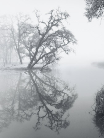 Trees Amidst Fog Photographic Print by Diane Miller