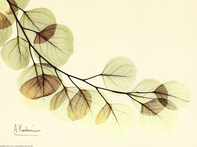 Sage Eucalyptus Leaves II Art Print