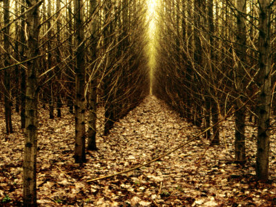 Forest of Trees with Infinite Pathway Photographic Print by Paul Hernandez