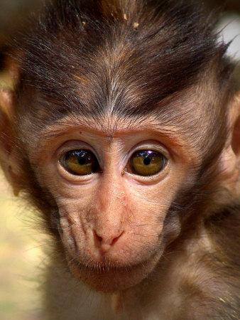Baby Monkey Photographic Print by Abdul Kadir Audah