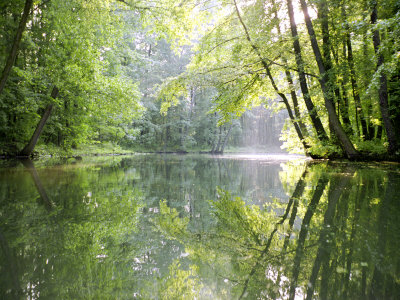 Spreewald Canal Reflection, an Area of Old Canals in Woods Photographic Print by Diane Miller