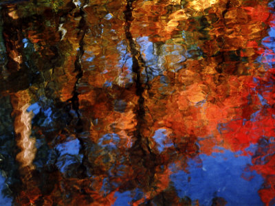 Reflection of Red Maples and Blue Sky in Creek, Sedona, Arizona, USA Photographic Print by Margaret L. Jackson