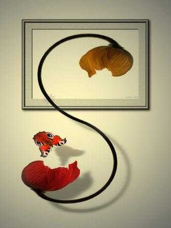 Butterfly Beside Poppy Flower Photographic Print by Abdul Kadir Audah