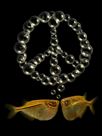 Two Tetra Fish Blowing Peace Symbol Shaped Bubbles Fotografisk tryk