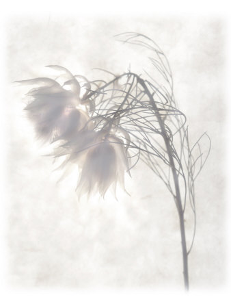 Still Life of Flowers Photographic Print by Joyce Tenneson