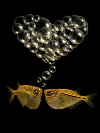 Tetra Fish Blowing Bubbles in Heart Shape Photographic Print by Abdul Kadir Audah
