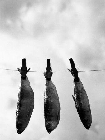 Drying Sardines on Clothesline Photographic Print by Abdul Kadir Audah