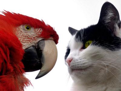 The Parrot and the Cat Photographic Print by Abdul Kadir Audah