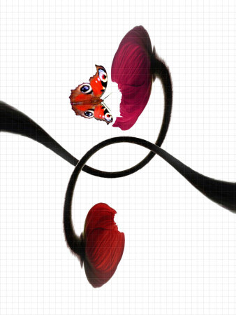 A Butterfly and Two Poppy Flowers with Geometry Paper as the Background Photographic Print by Abdul Kadir Audah
