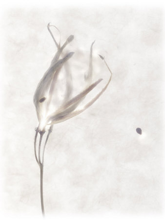 Still Life of a Flower Photographic Print by Joyce Tenneson